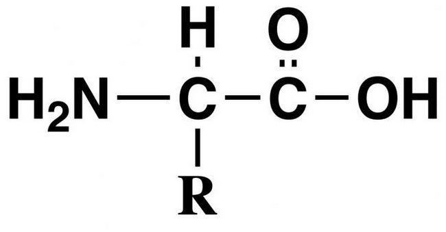 20 aminokiselina proteina