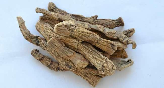 suhe korijene ara