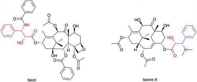 biokemija amino kiselina 20