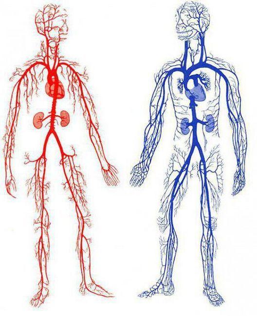 krvarenje krvnih žila prve pomoći