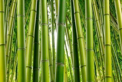 deka od bambusa