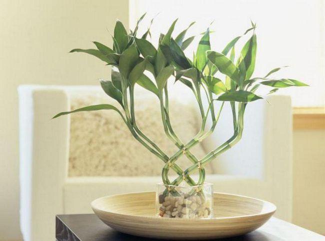 bambus je trava ili stablo