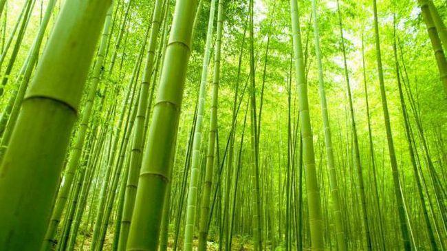 Što je to bambus vlakno?