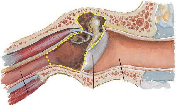 zidovi timpanske membrane