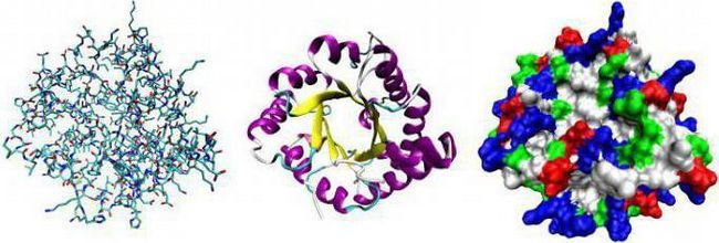 funkcija enzimskih proteina u tijelu