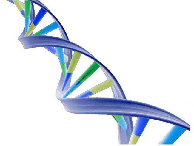 biološka uloga fosfora u tijelu