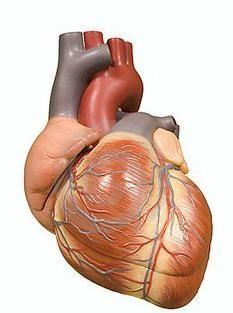 lijevi srčani blok