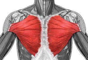 Veliki pectoralis mišić