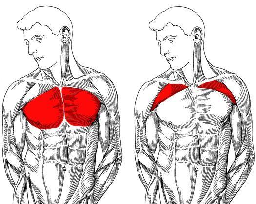 Donji dio prsnih mišića