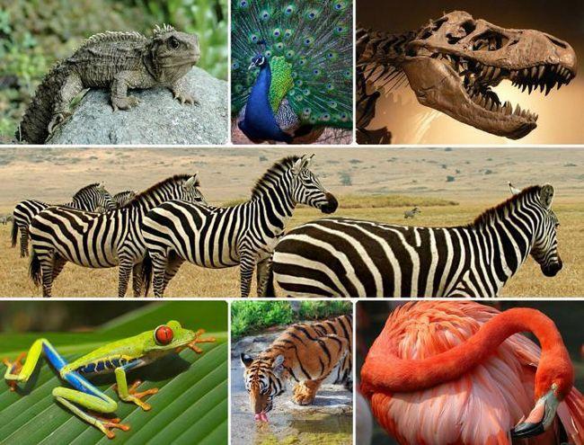 что общего в строении всех живых организмов