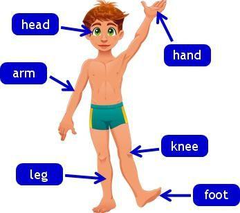 dijelovi tijela na engleskom jeziku
