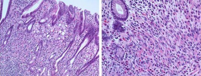 цитоплазма животной клетки