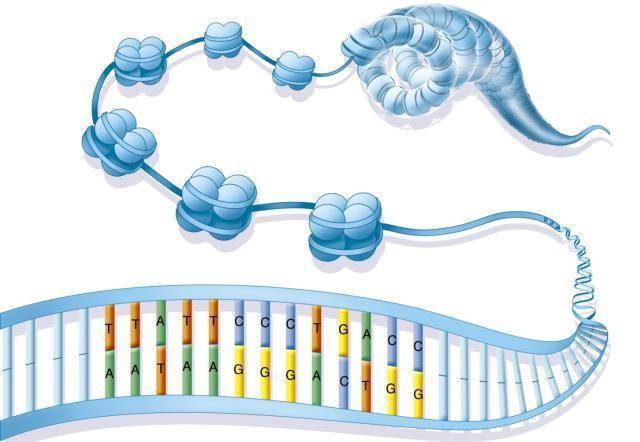 struktura i funkcija kromatina