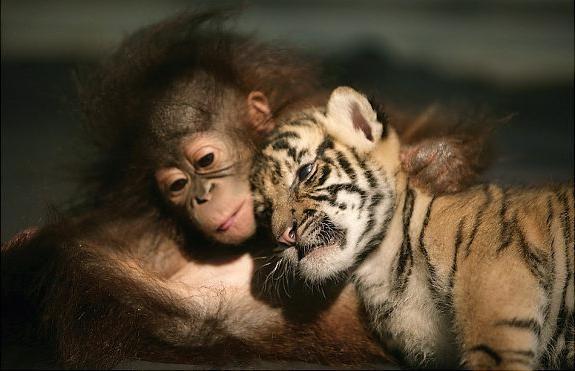 suosjećanje za životinje