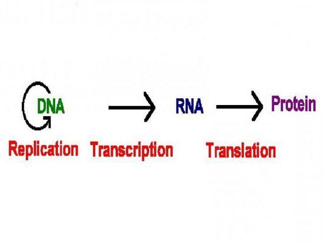 transkripcija u biologiji je
