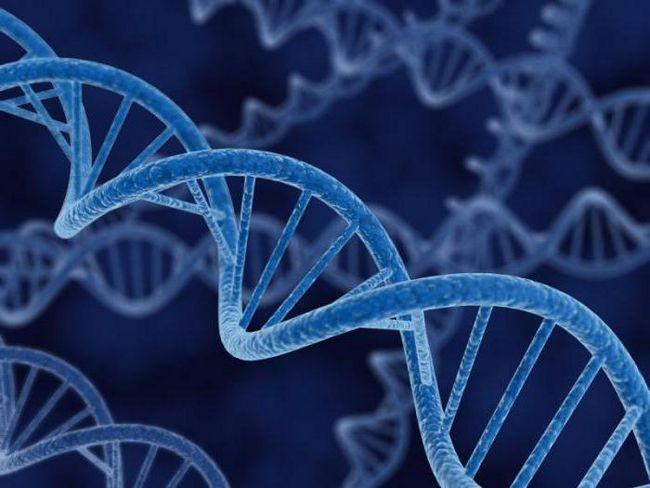 sažimanje biologije transkripcije