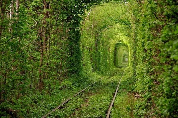 Дикая природа Украины. Памятники природы Украины