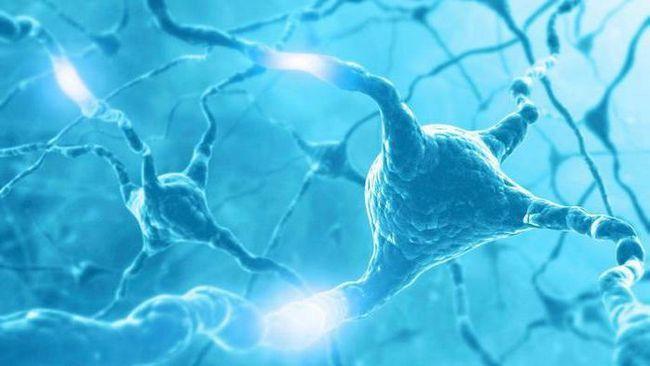 što je fiziologija čovjeka