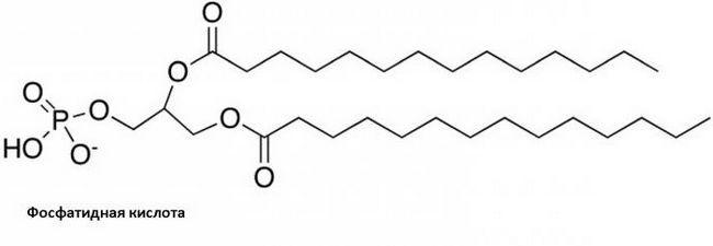 fosfatidna kiselina