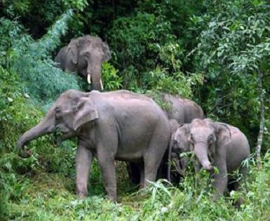 Gdje slona živi, možete saznati po svom imenu