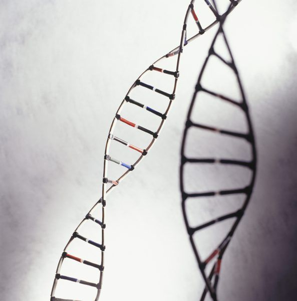 genotip je zbirka gena