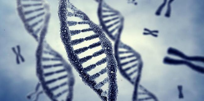 ljudski genotip je