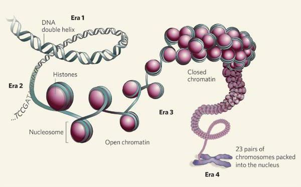 Proteini histona