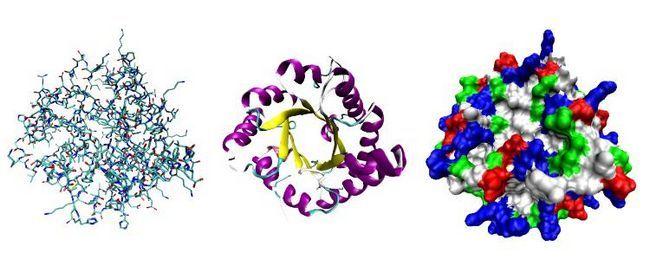 Vrste proteina