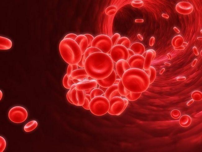 Protein Hemoglobin