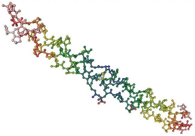 Globularni i fibrilarni proteini