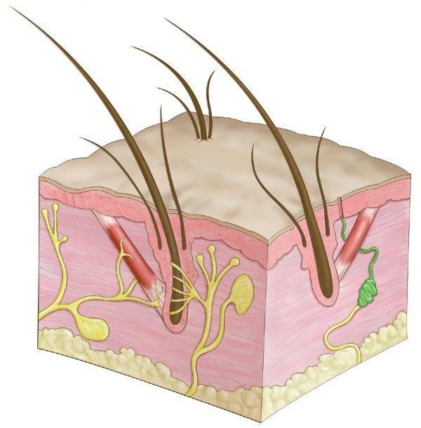 hormona i njihovih funkcija u tijelu