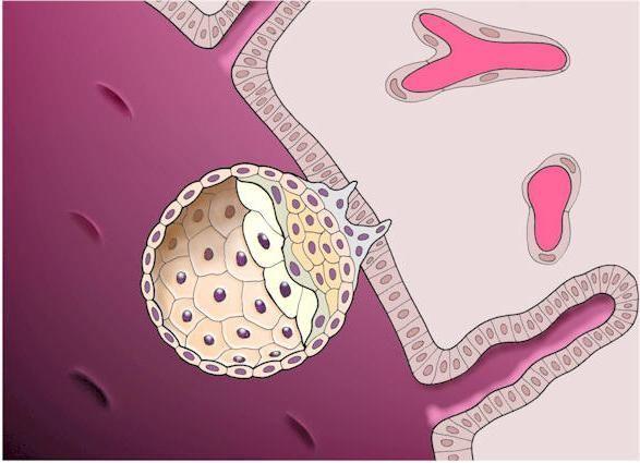 Implantacija krvarenje koliko dugo