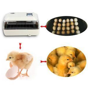 Инкубаторы автоматические. Отзывы об автоматических инкубаторах для яиц