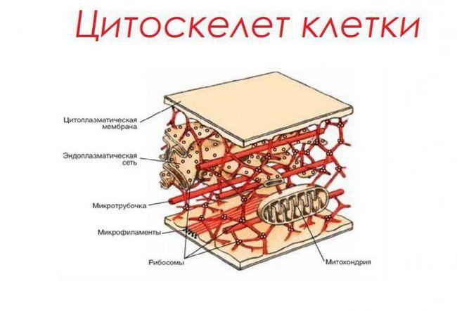 protein se sastoji od nukleotida