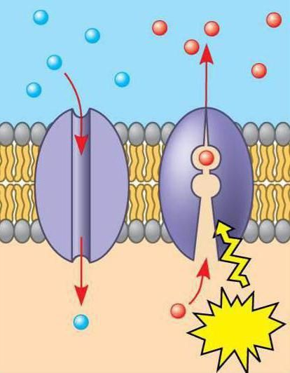 Opće informacije o proteinima i njihovoj klasifikaciji