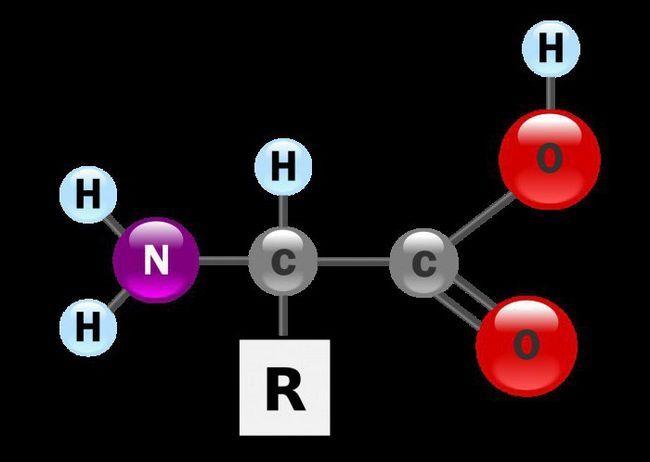 Što se sastoje od jednostavnih i složenih proteina?