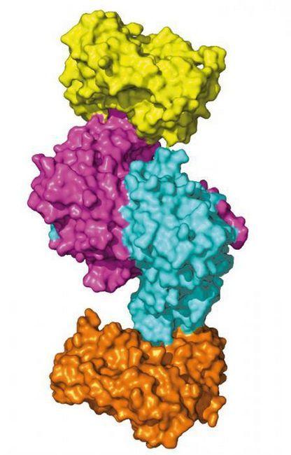 Organski spojevi proteina