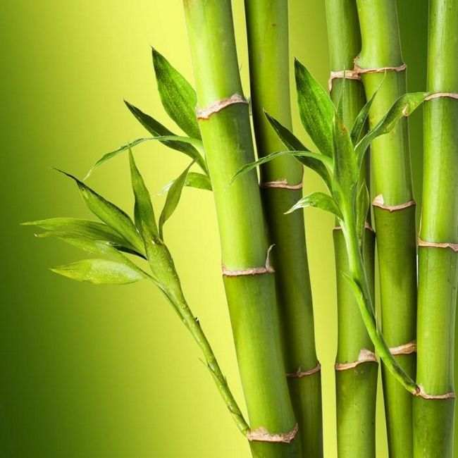 bambus deke recenzije