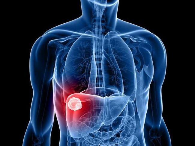 gustoća jetre