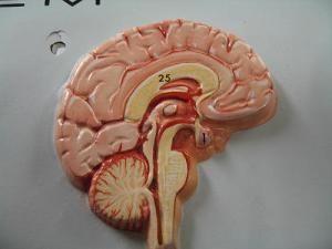 Endokrine bolesti