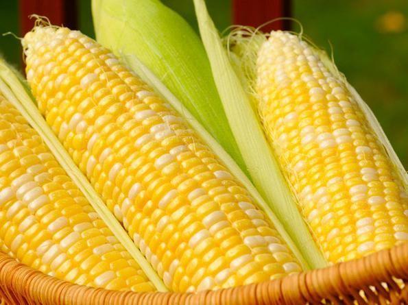 К чему снится кукуруза: версии различных сонников