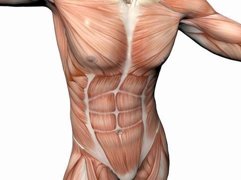 velike mišiće