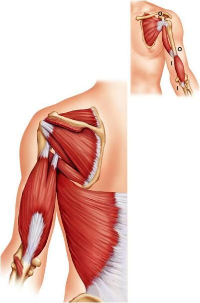 pokret mišića