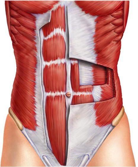 mišiće tiska