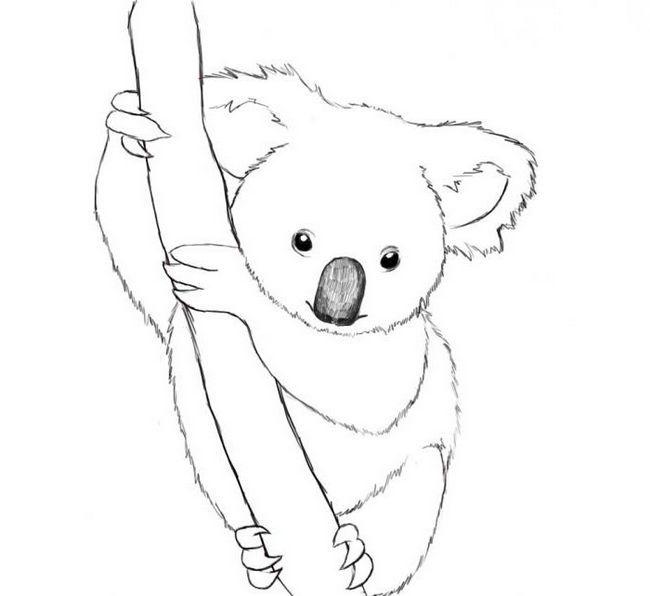 kako privući koalu