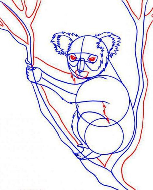 kako crtati koala olovku u fazama