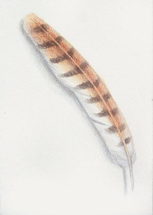 kako crtati pticu pero pero