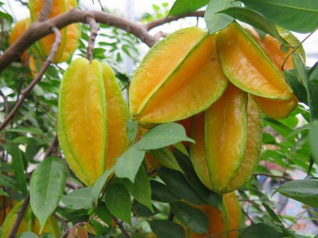 voće u obliku zvjezdice