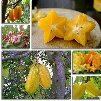 egzotično voće sa zvjezdicom