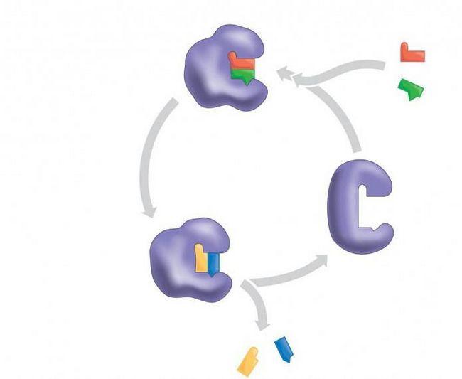 ферменты биологические катализаторы белковой природы